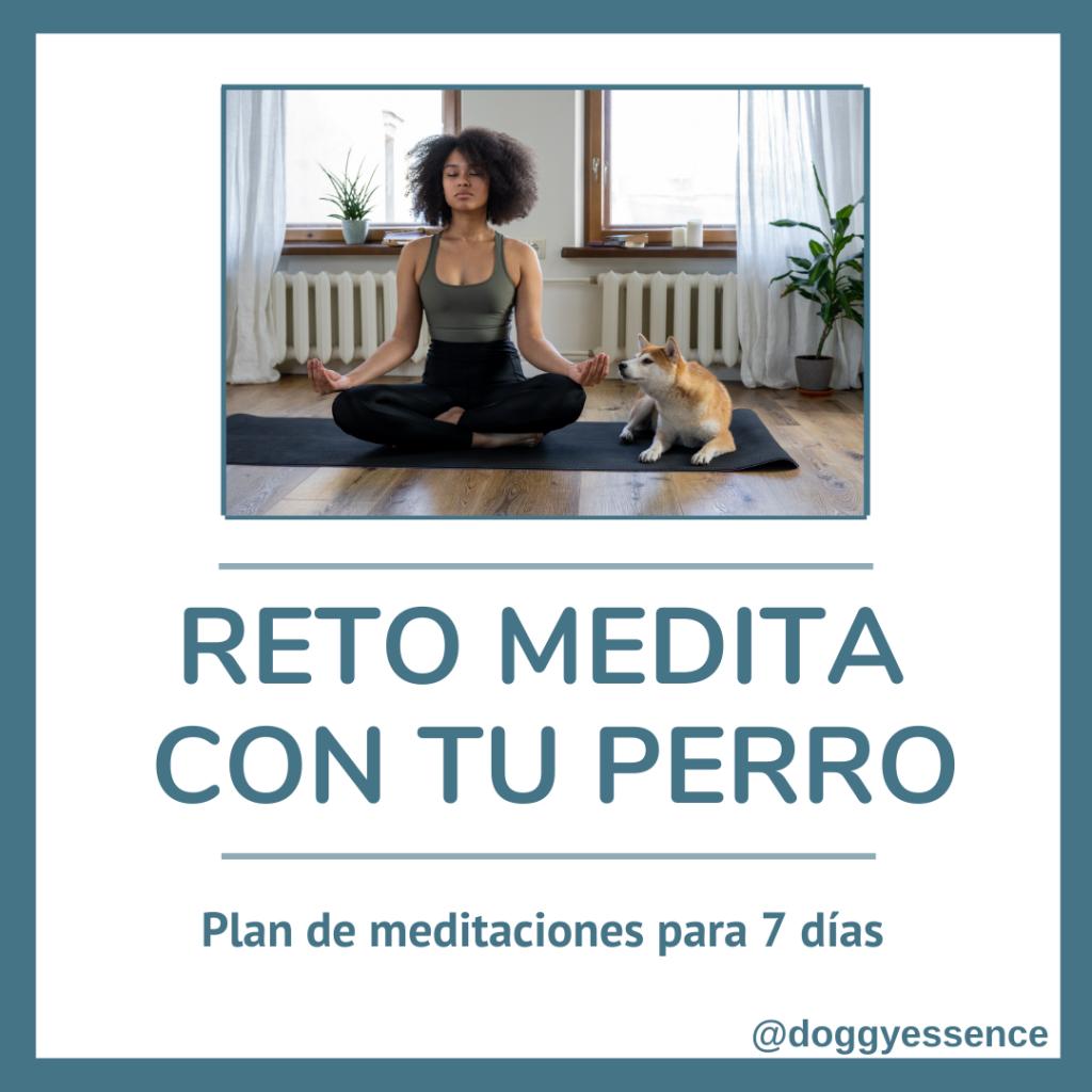 Curso medita con tu perro